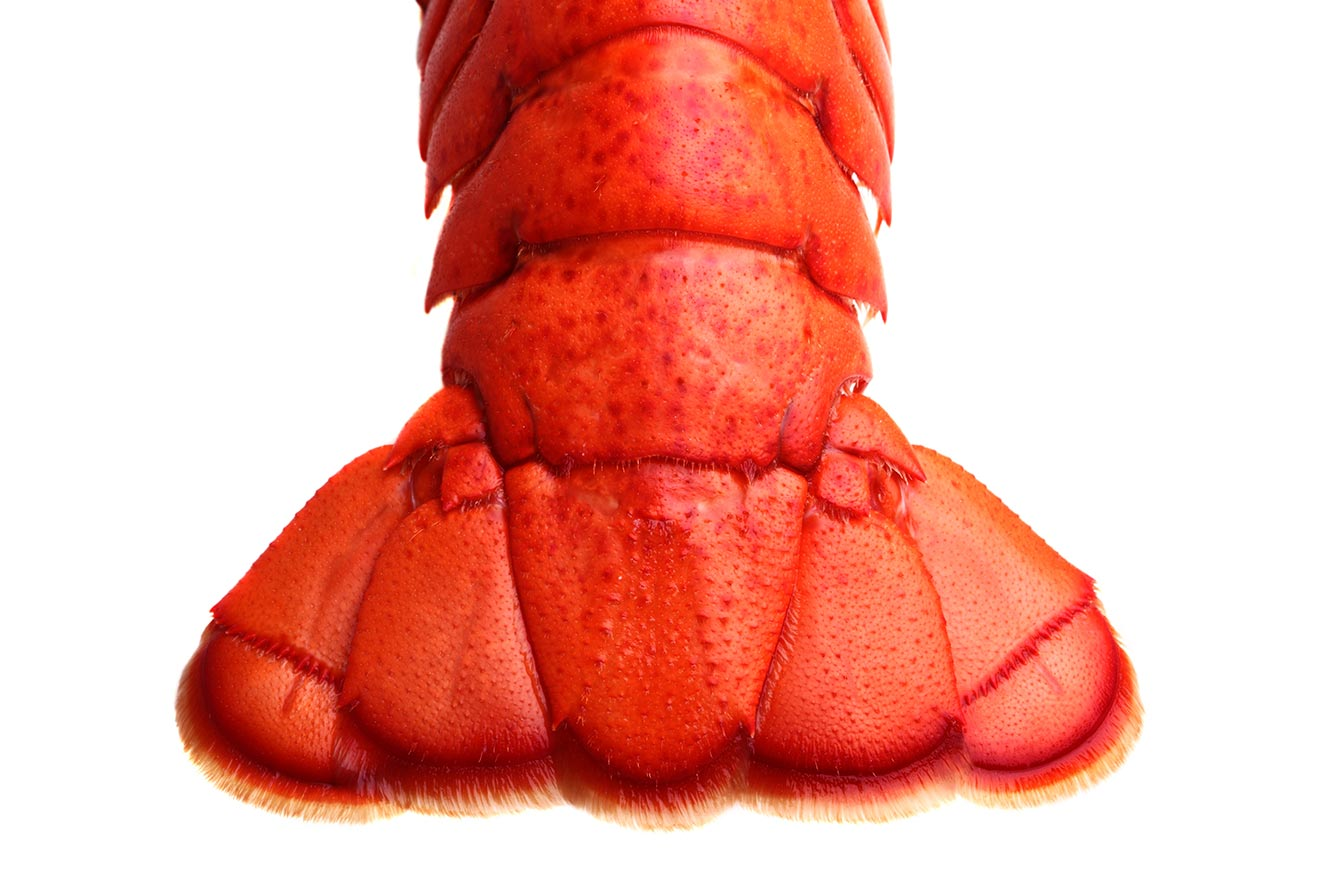 Premium Lobster Products - Cooked PEI Lobster Tail